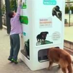 Garrafas para reciclagem alimentam cães abandonados